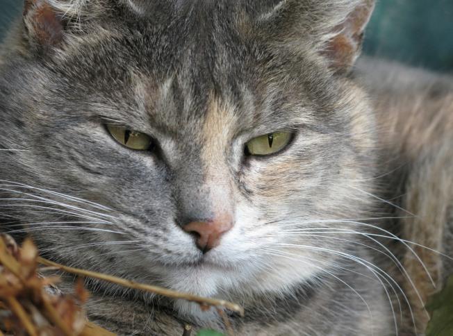 Kitty Cat Closeup