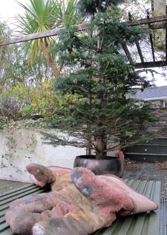 Living Christmas Tree, Digging Up A Christmas Tree