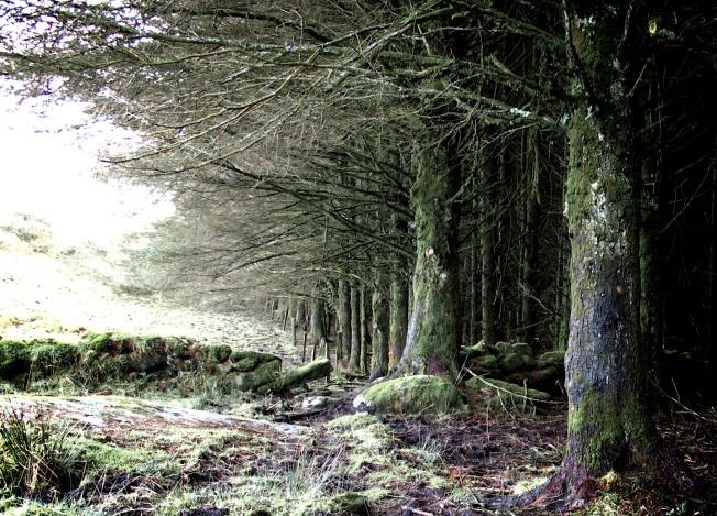 Bodmin Moor, Winter Trees