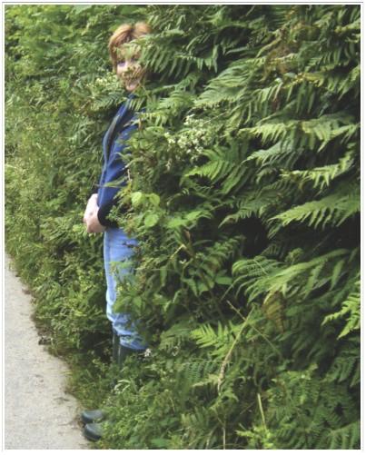 E Hedge