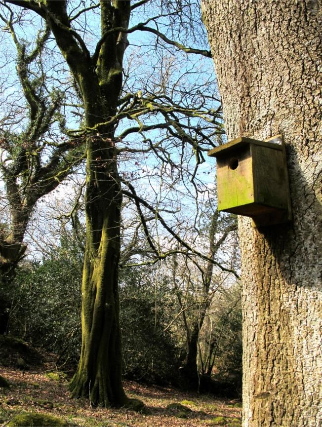 Birdbox Cornwall - Elizabeth Harper
