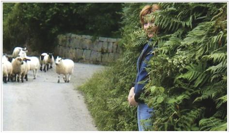 Sheepish E - Elizabeth Harper