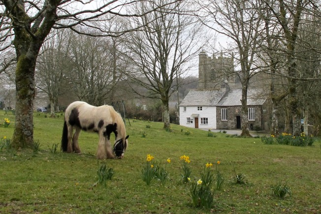 Horse on Village Green In England